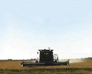 img-Hybrid-Rice