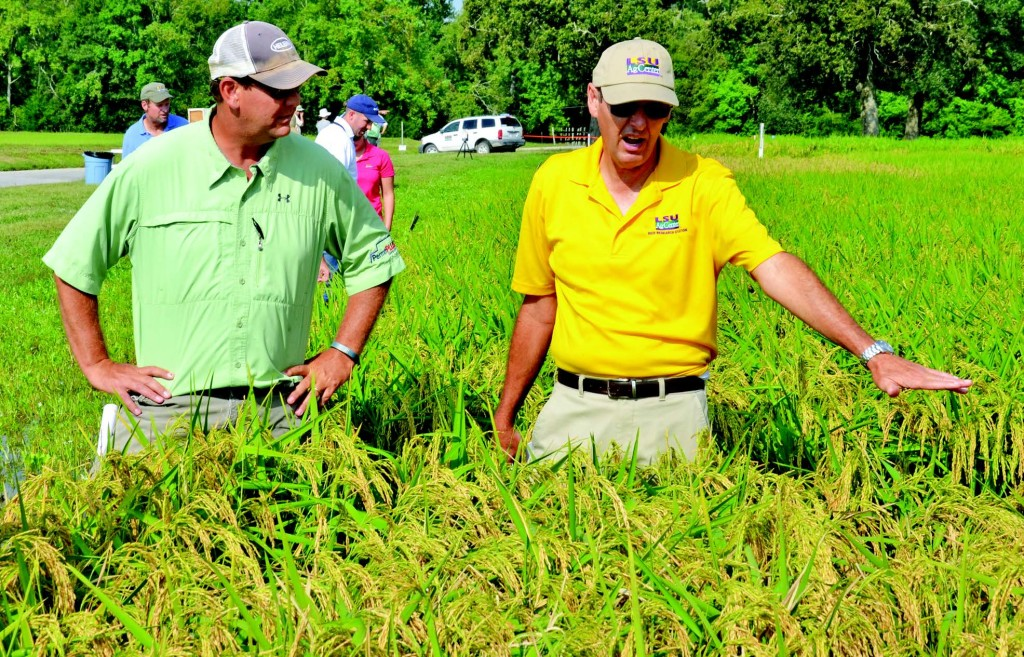 Don Groth, LSU AgCenter pathologist, at right, talks with crop consultant Doug Leonards about disease symptoms during a field day at the Rice Research Station.