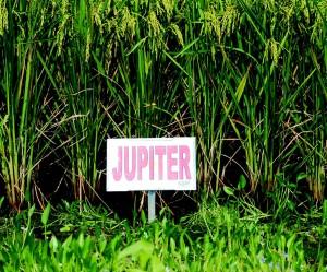 JupiterRFJan2015