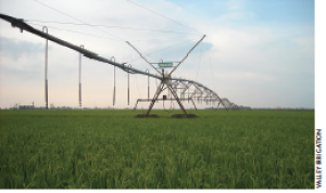 The USDA now offers crop insurance to rice producers in Arkansas, Missouri, Tennessee and Texas using center-pivot irrigation.