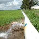 polypipe in Louisiana rice