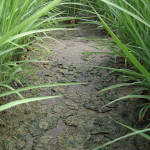 alternate wet dry