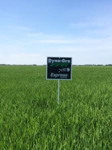 Express rice