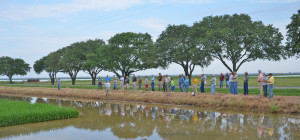 Evangeline parish field day