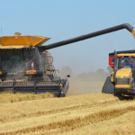 California rice harvest