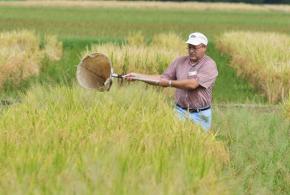 AgCenter rice entomologist to lead LSU entomology department