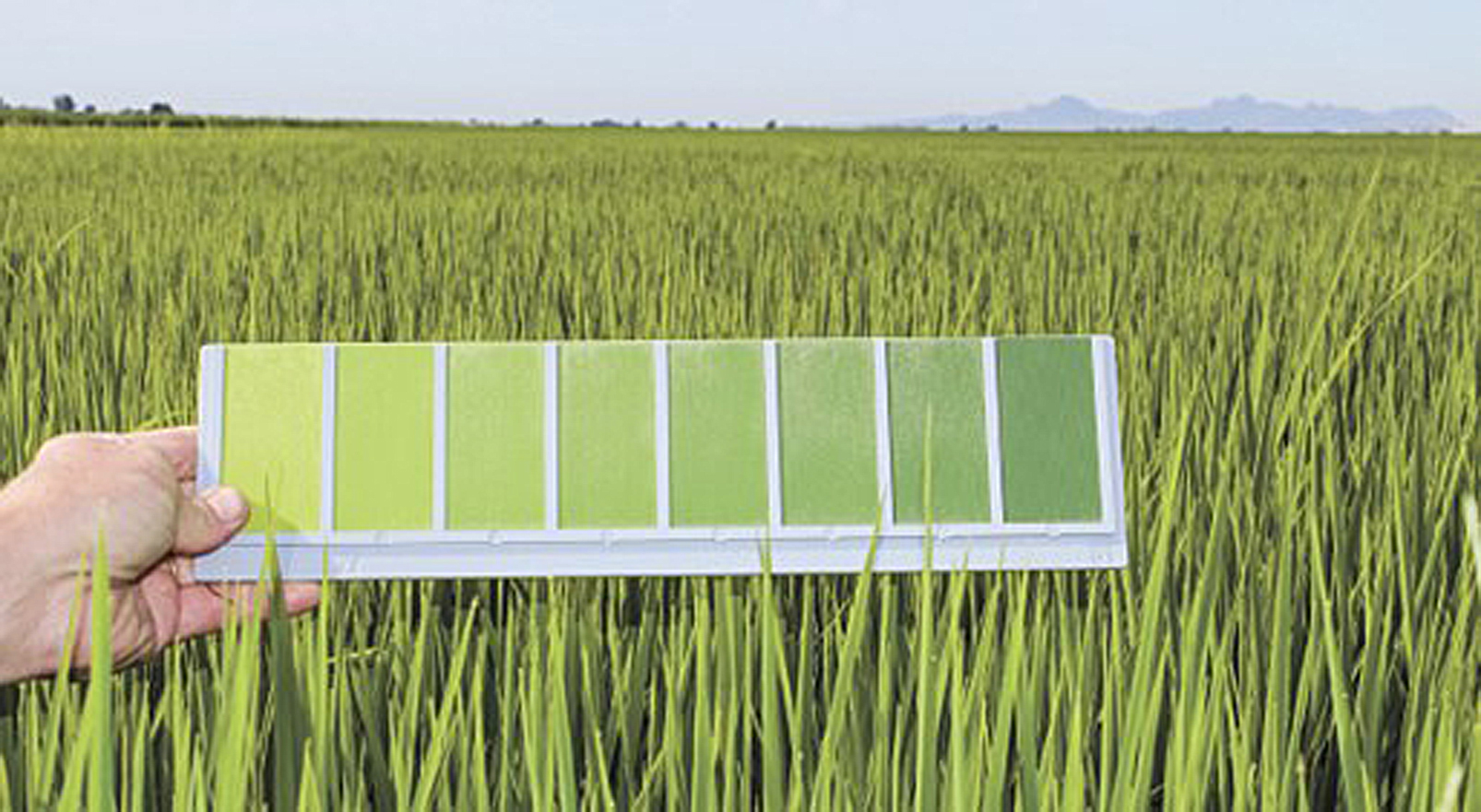 The Color Green Rice Farming