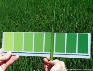 Leaf Color Chart