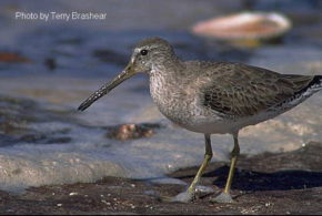 NRCS to expand shorebird conservation efforts in Louisiana