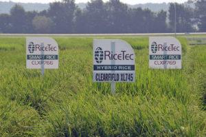 new RiceTec hybrids