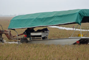 LSU AgCenter surveys crawfish producers about COVID-19 impacts