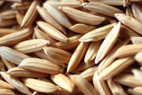 Louisiana temporarily lowers rice seed germination standards