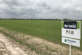 Field day offers a chance to see Provisia Rice on a commercial scale