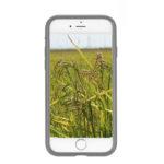 weedy rice smartphone app