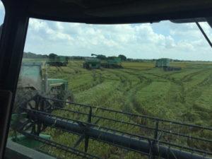 Texas rice before Harvey