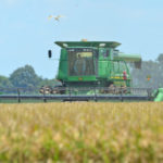Louisiana rice harvest