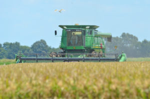 Louisiana rice harvest
