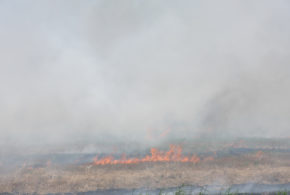 Arkansas task force adopts voluntary field burning rules