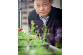 CRISPR-edited rice plants produce higher yields