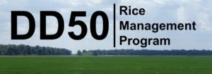 DD50 rice management program