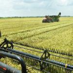 cart in a rice field