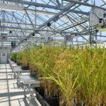 new university of arkansas greenhouse