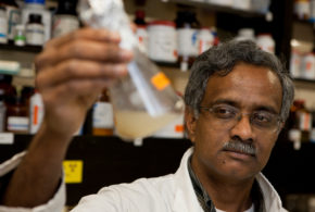 UF-led study may pay off with more heat-tolerant rice