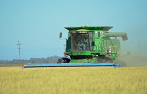 Sacramento Valley rice harvest