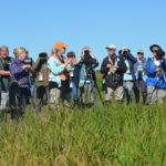 birders scope out birds in a newly harvested field