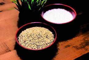 Missouri releases first variety, a semi-dwarf medium grain