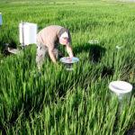 sampling rice fields for methane
