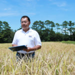 LSU AgCenter Herry Utomo evaluates high-protein rice