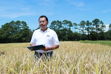 LSU AgCenter Herry Utomo evaluates high-protein rice