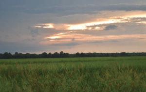 sunset over rice