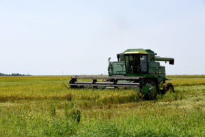 University of Arkansas rice plot harvester