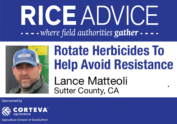 rice advice california