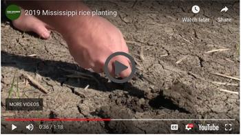 2019 Mississippi rice planting video