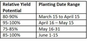 planting date studies