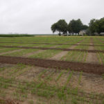 msu rice field trials