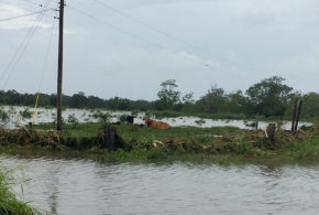 Hurricane Barry floodwaters affected Southwest Louisiana crops
