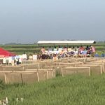 2018 U ark rice field day