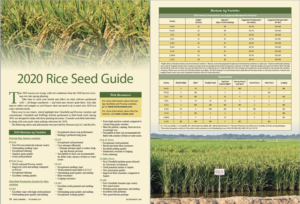 2020 rice seed guide