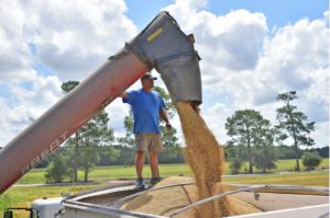 michael fruge unloads grain