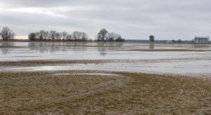 rain ponds in a field