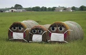 masked hay bales