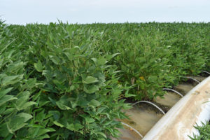 polypipe soybeans