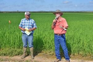 lsu agcenter row rice field day