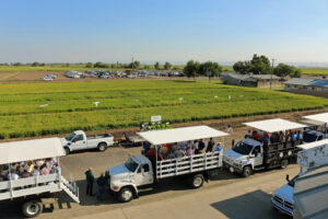 CA rice field day