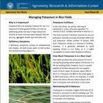 ucce rice fact sheet