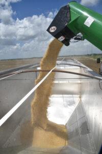 loading rice